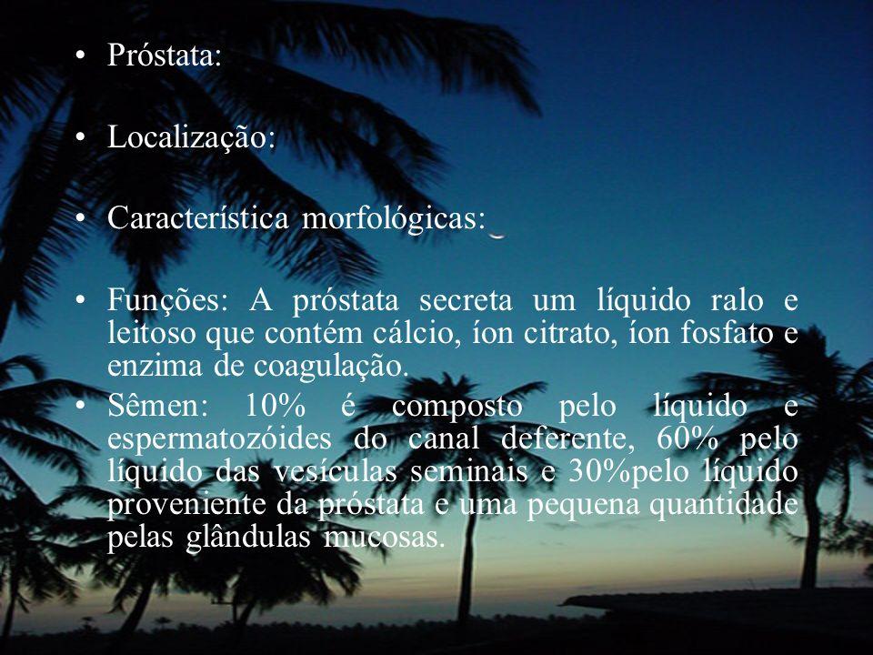 Próstata: Localização: Característica morfológicas: