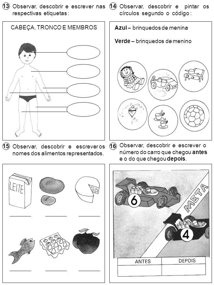 CABEÇA, TRONCO E MEMBROS