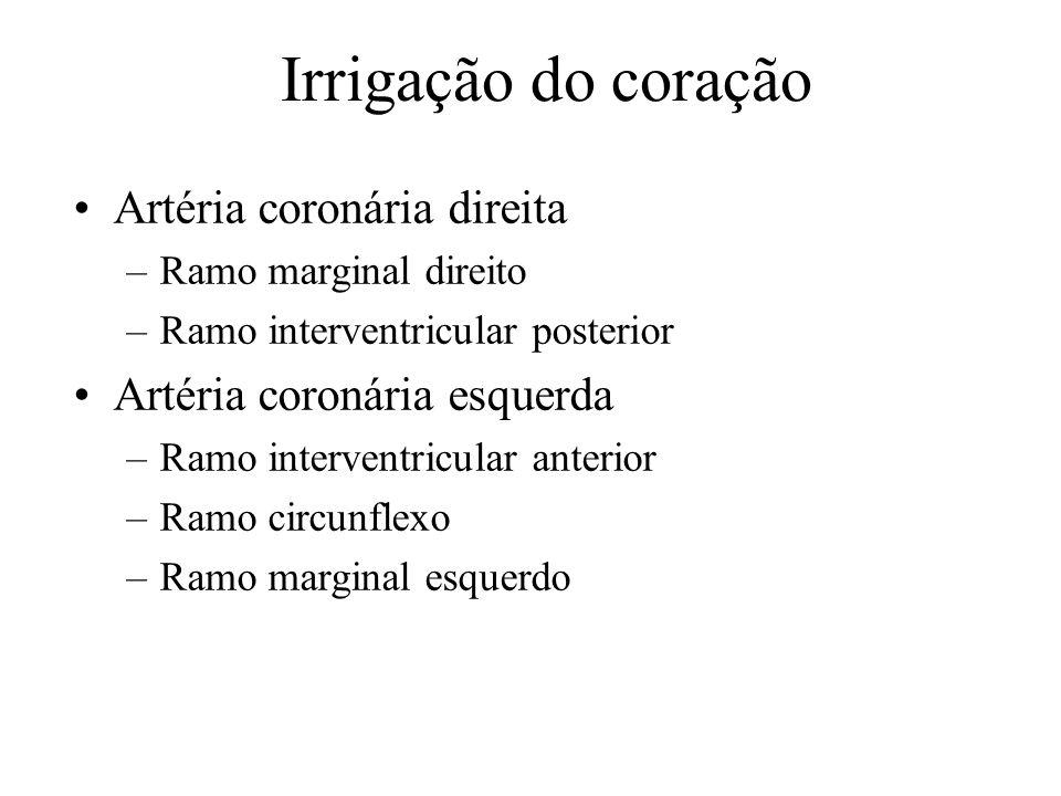 Irrigação do coração Artéria coronária direita
