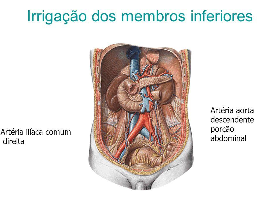 Irrigação dos membros inferiores