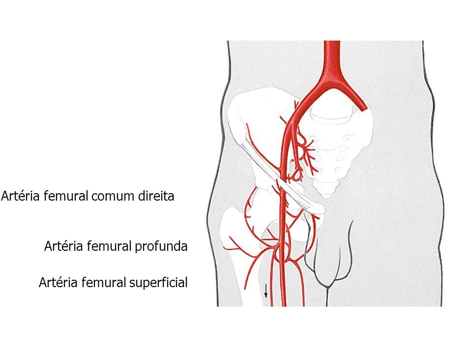 Artéria femural comum direita