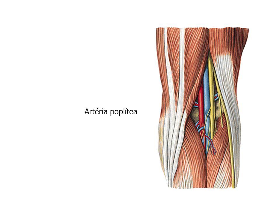 Artéria poplítea