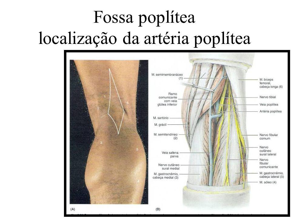 Fossa poplítea localização da artéria poplítea