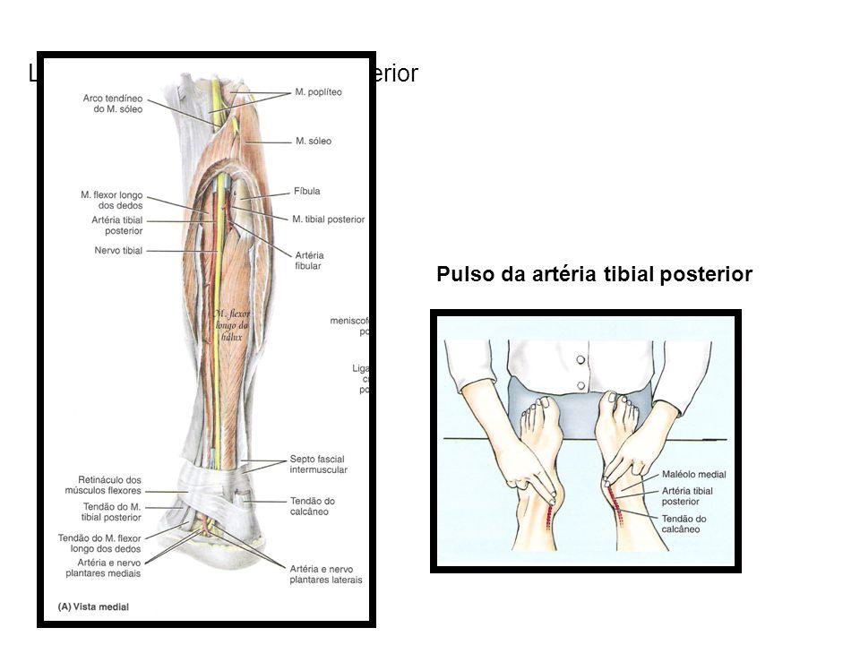 Localização da artéria tibial posterior