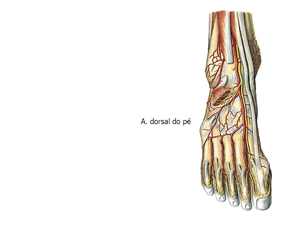 A. dorsal do pé
