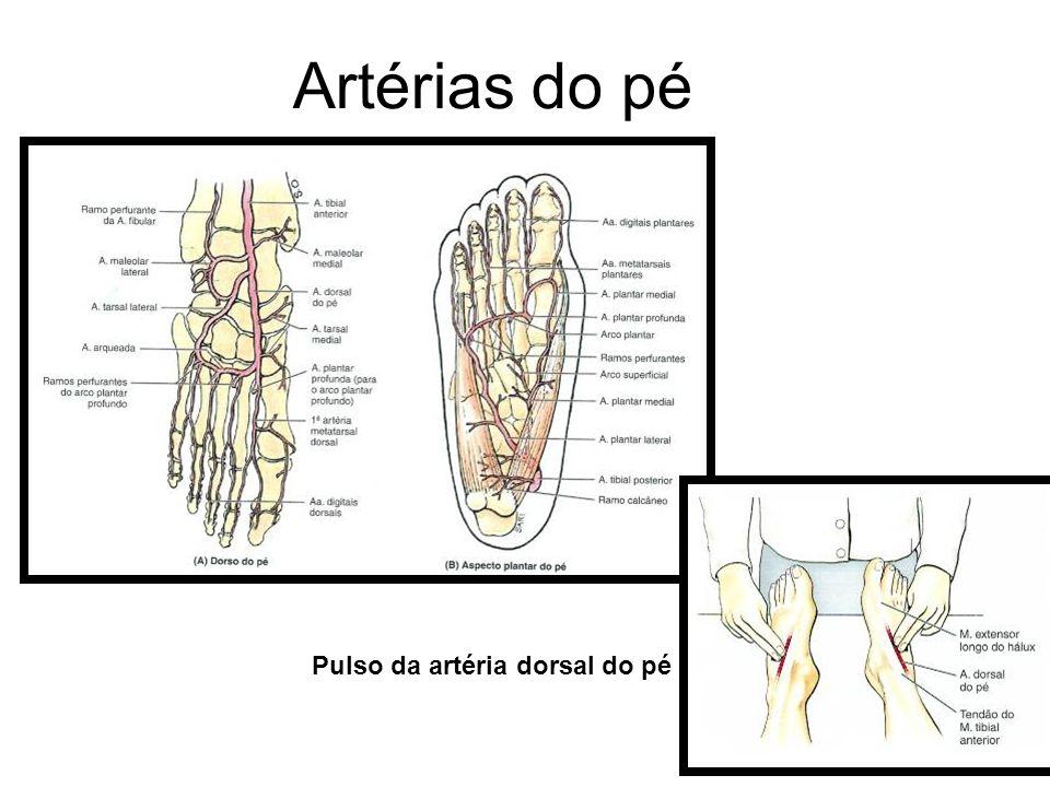 Artérias do pé Pulso da artéria dorsal do pé