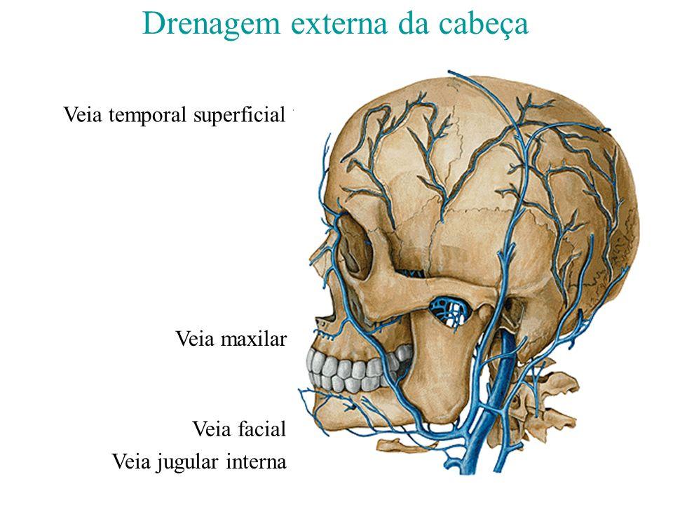 Drenagem externa da cabeça