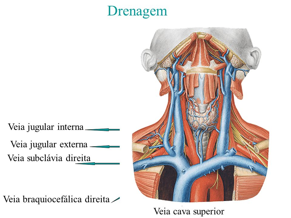 Drenagem Veia jugular interna Veia jugular externa