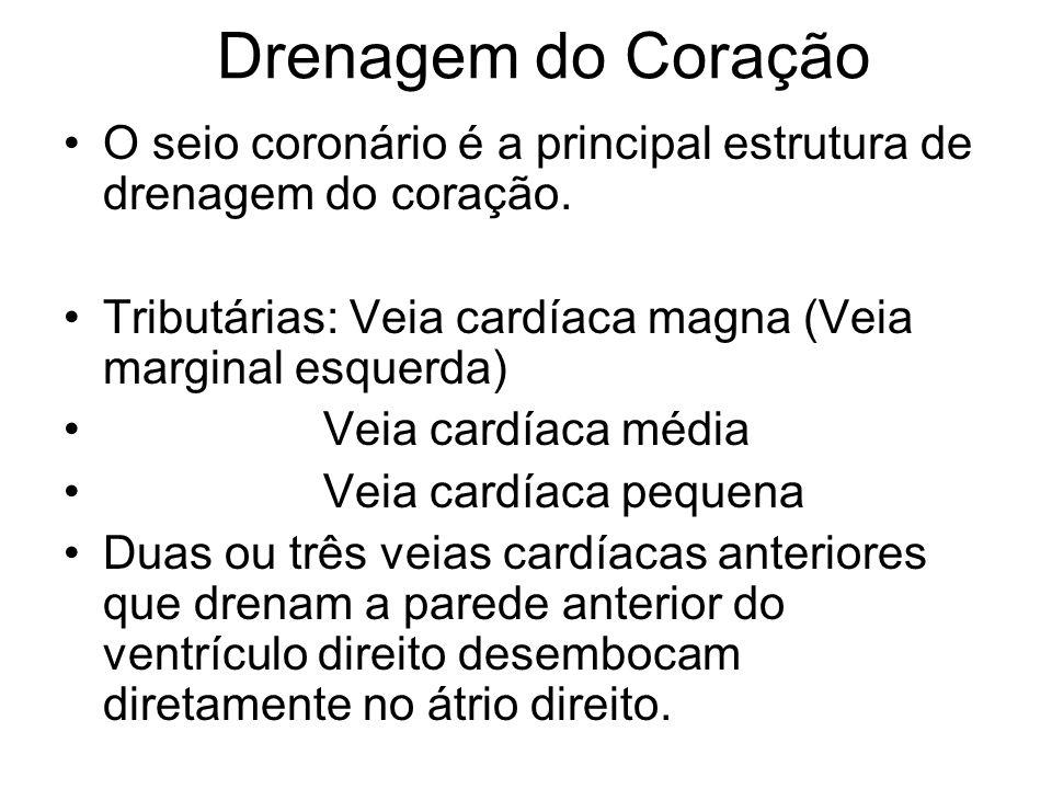 Drenagem do Coração O seio coronário é a principal estrutura de drenagem do coração. Tributárias: Veia cardíaca magna (Veia marginal esquerda)