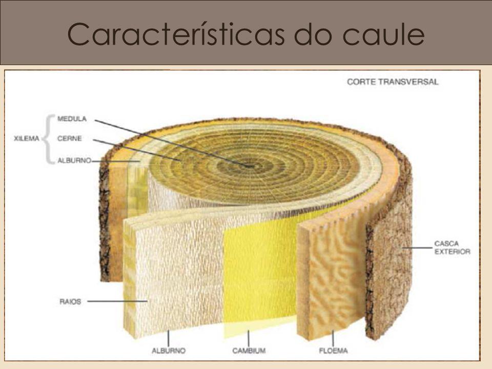 Características do caule