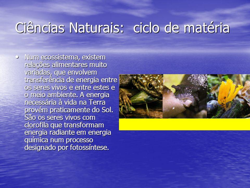 Ciências Naturais: ciclo de matéria