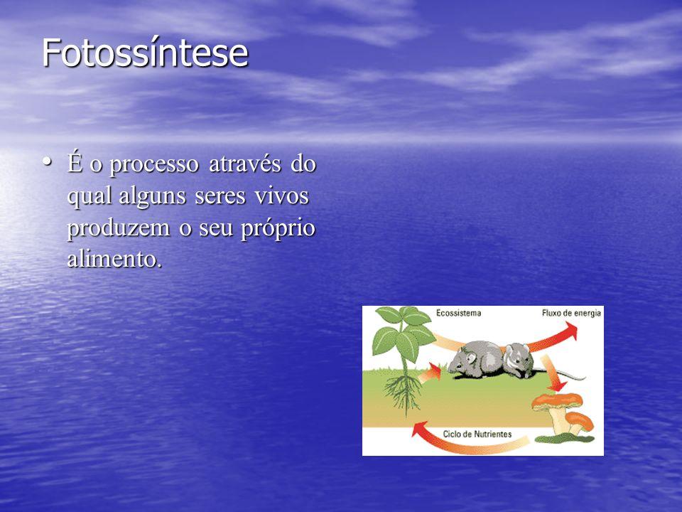 Fotossíntese É o processo através do qual alguns seres vivos produzem o seu próprio alimento.