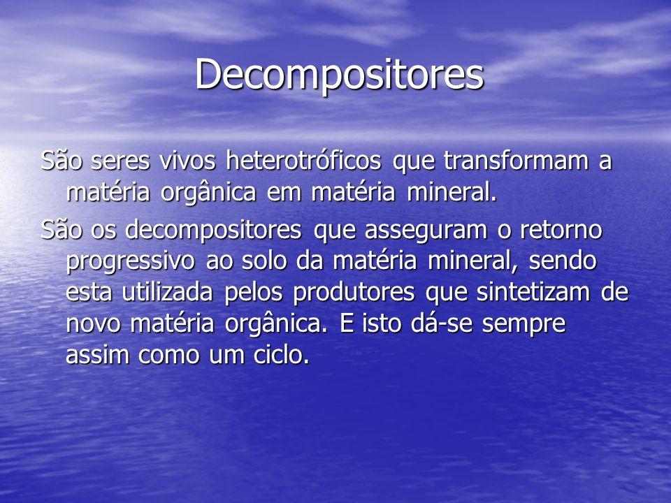 Decompositores São seres vivos heterotróficos que transformam a matéria orgânica em matéria mineral.