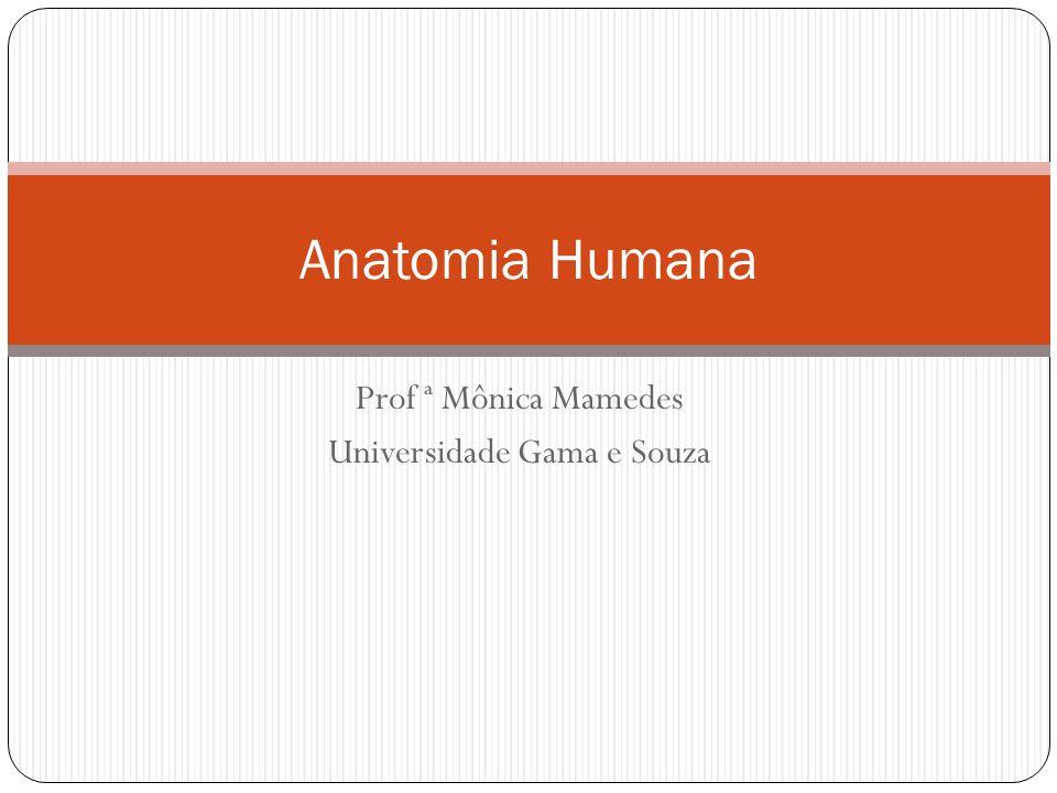 Prof ª Mônica Mamedes Universidade Gama e Souza