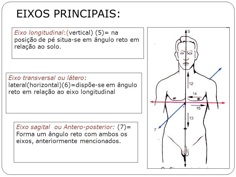 EIXOS PRINCIPAIS: Eixo longitudinal:(vertical) (5)= na posição de pé situa-se em ângulo reto em relação ao solo.