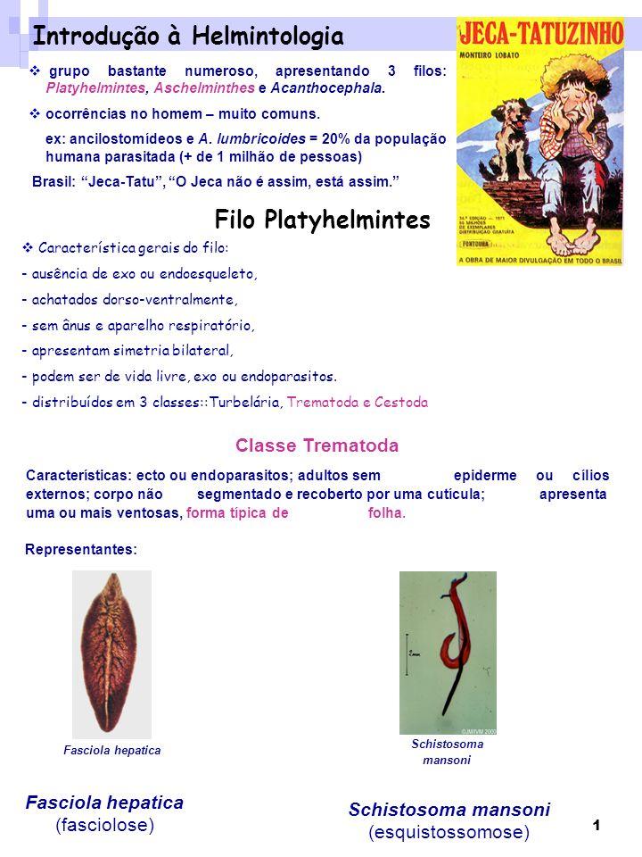 Schistosoma mansoni (esquistossomose)