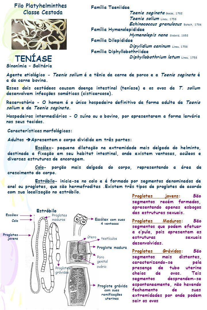 TENÍASE Filo Platyhelminthes Classe Cestoda Família Taeniidae