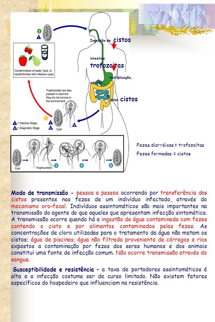 Ingestão de cistos intestino trofozoitas. multiplicação, adesão. cólon cistos. Fezes diarréicas = trofozoítas.