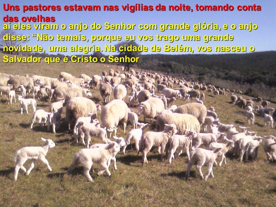 Uns pastores estavam nas vigílias da noite, tomando conta das ovelhas