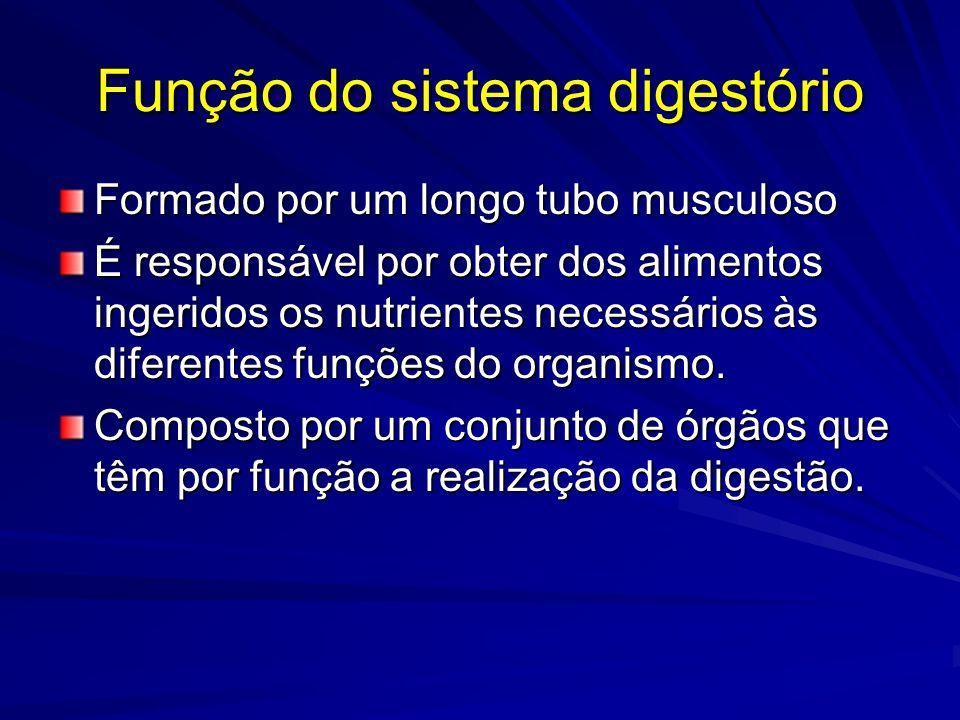 Função do sistema digestório