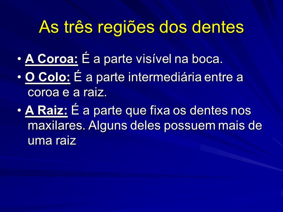 As três regiões dos dentes
