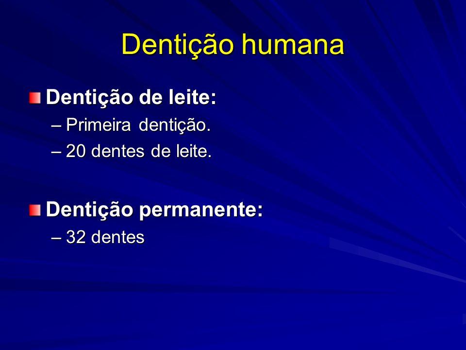 Dentição humana Dentição de leite: Dentição permanente: