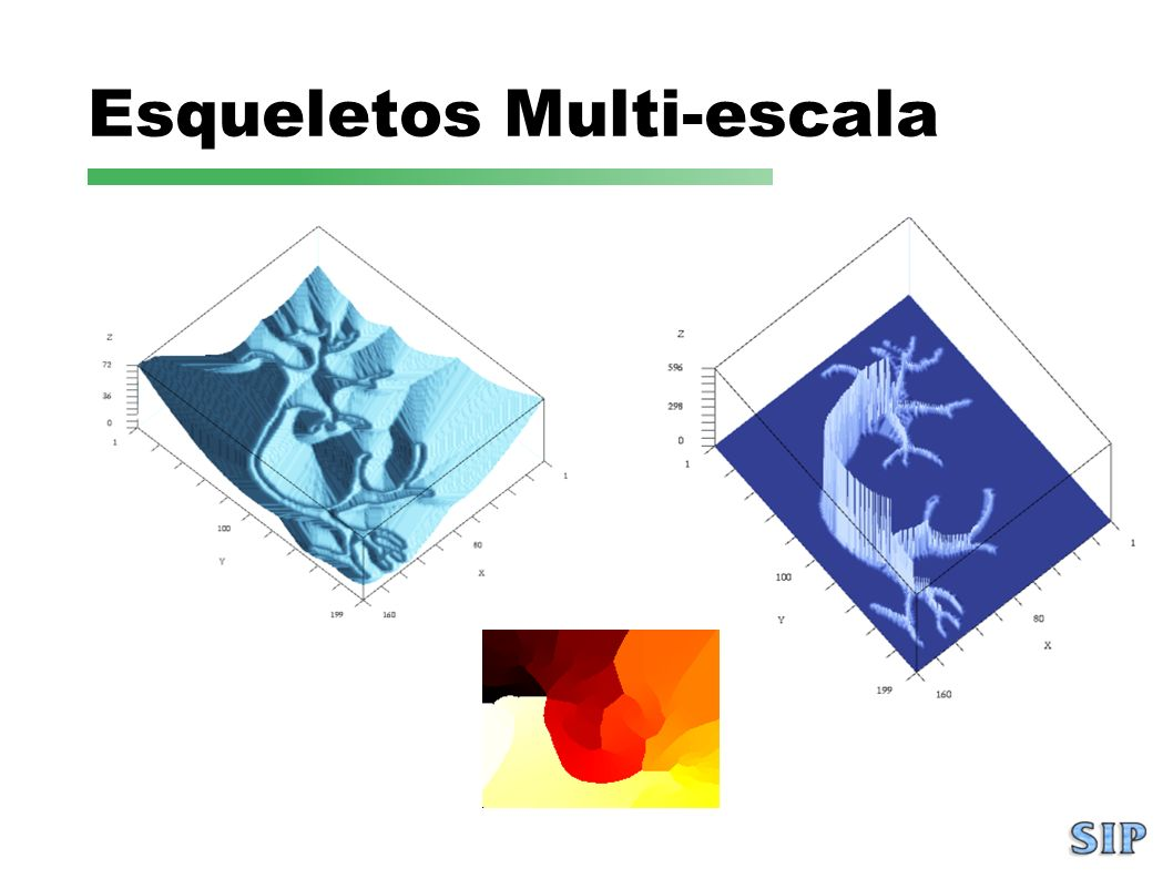 Esqueletos Multi-escala