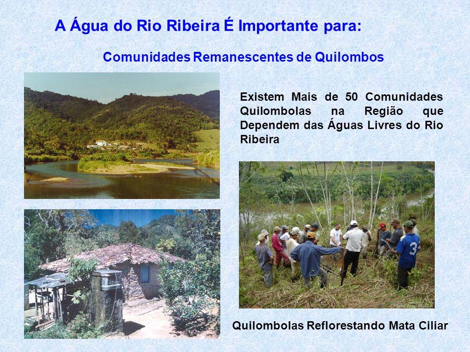 A Água do Rio Ribeira É Importante para: