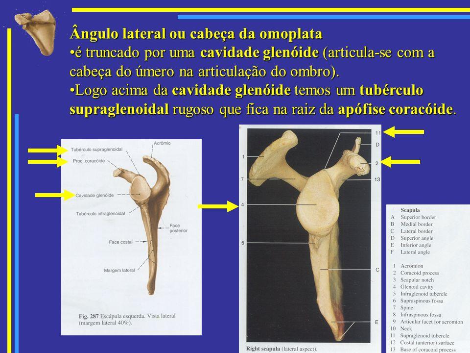 Ângulo lateral ou cabeça da omoplata
