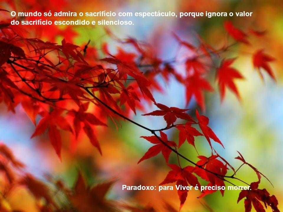 O mundo só admira o sacrifício com espectáculo, porque ignora o valor do sacrifício escondido e silencioso.