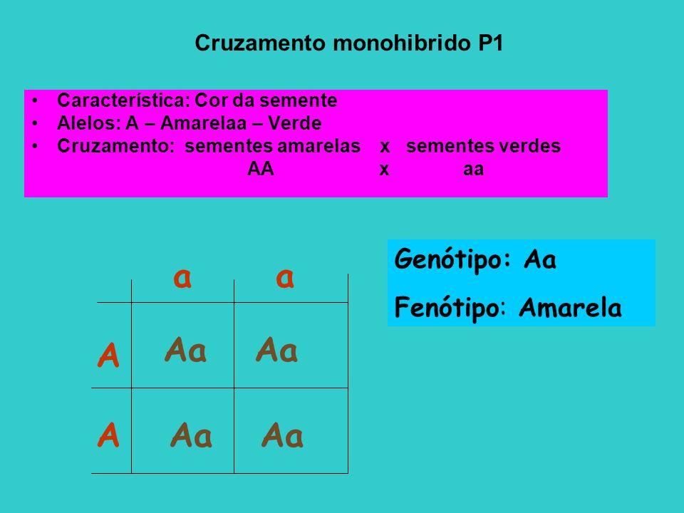 Cruzamento monohibrido P1