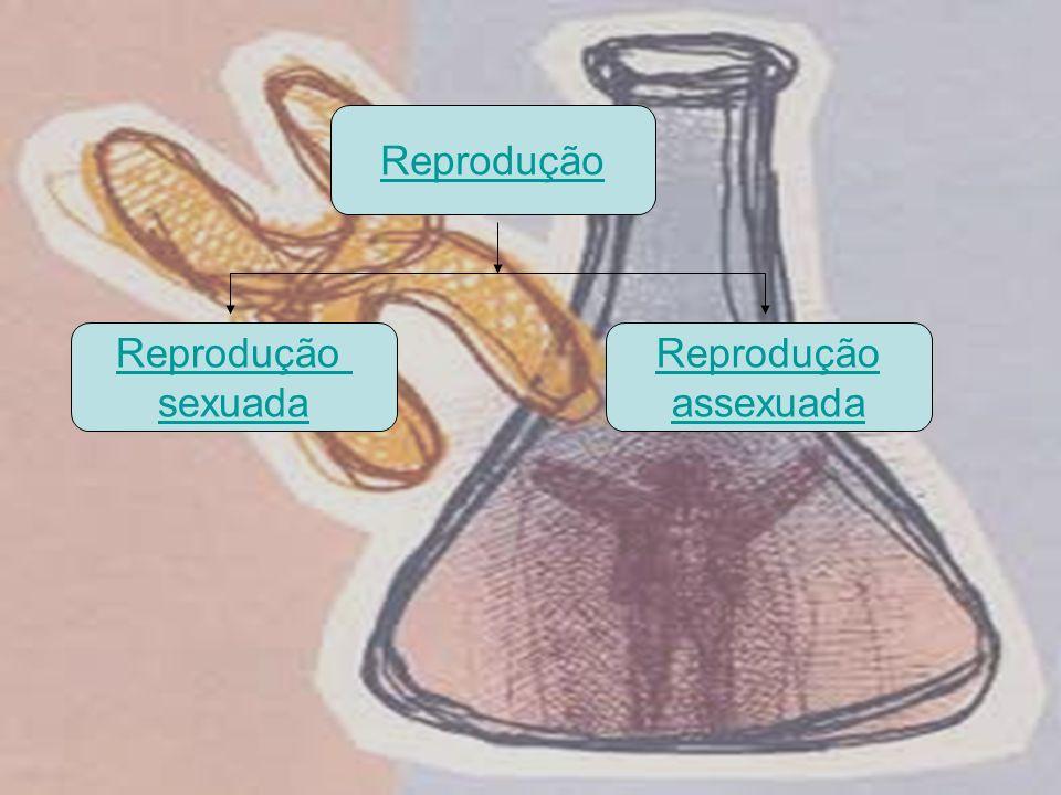 Reprodução Reprodução sexuada Reprodução assexuada