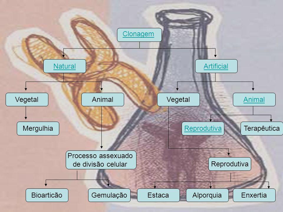 Clonagem Natural. Artificial. Vegetal. Animal. Vegetal. Animal. Mergulhia. Reprodutiva. Terapêutica.