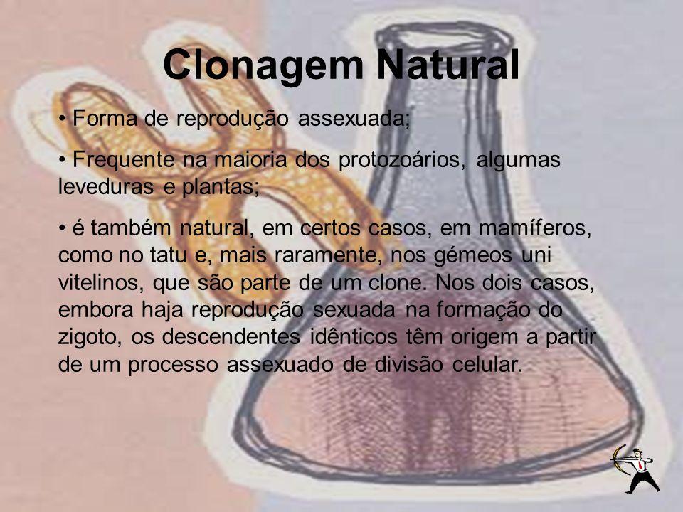 Clonagem Natural Forma de reprodução assexuada;
