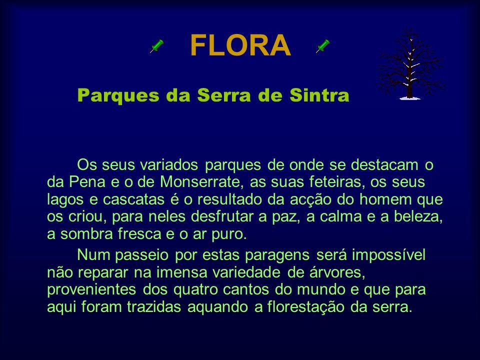 FLORA Parques da Serra de Sintra