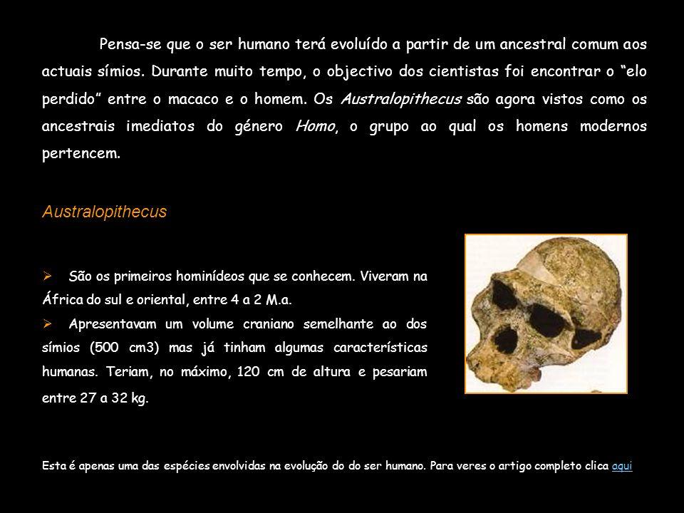 Pensa-se que o ser humano terá evoluído a partir de um ancestral comum aos actuais símios. Durante muito tempo, o objectivo dos cientistas foi encontrar o elo perdido entre o macaco e o homem. Os Australopithecus são agora vistos como os ancestrais imediatos do género Homo, o grupo ao qual os homens modernos pertencem.