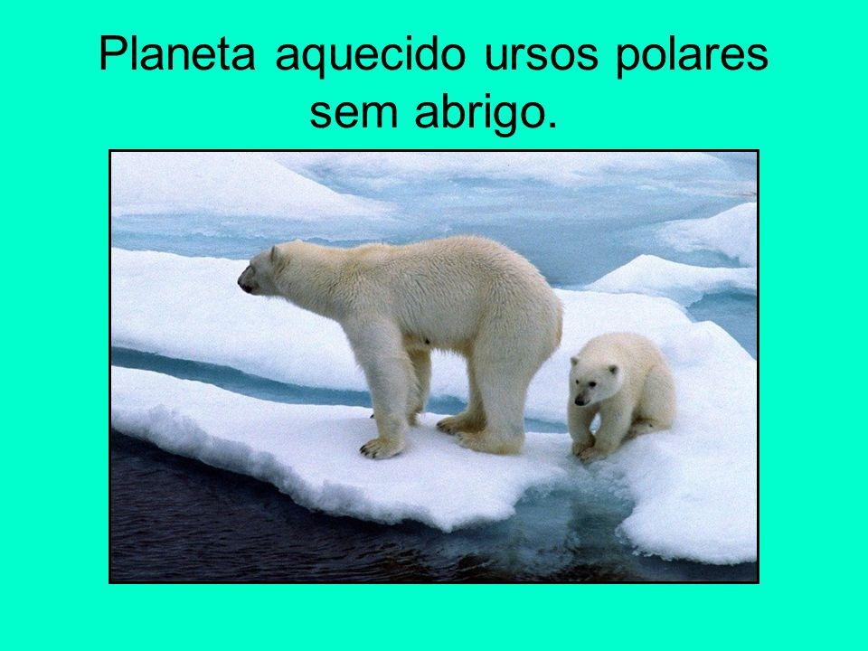 Planeta aquecido ursos polares sem abrigo.