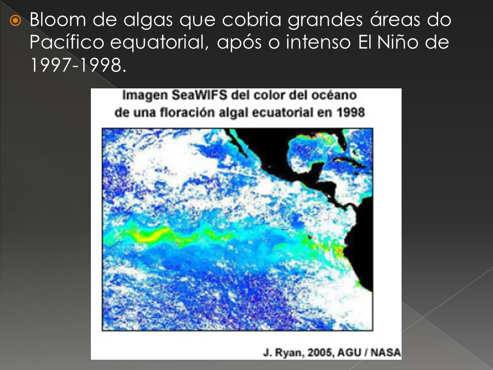 Bloom de algas que cobria grandes áreas do Pacífico equatorial, após o intenso El Niño de 1997-1998.