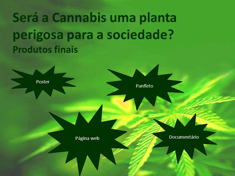 Será a Cannabis uma planta perigosa para a sociedade