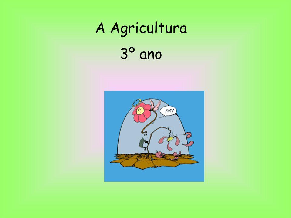 A Agricultura 3º ano