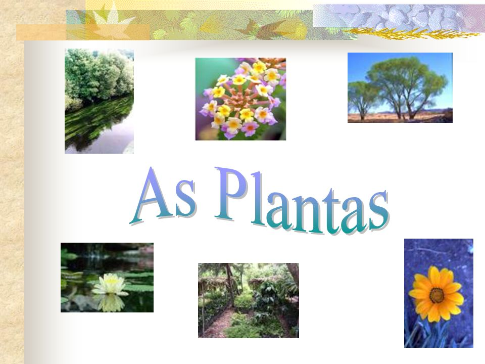 As Plantas