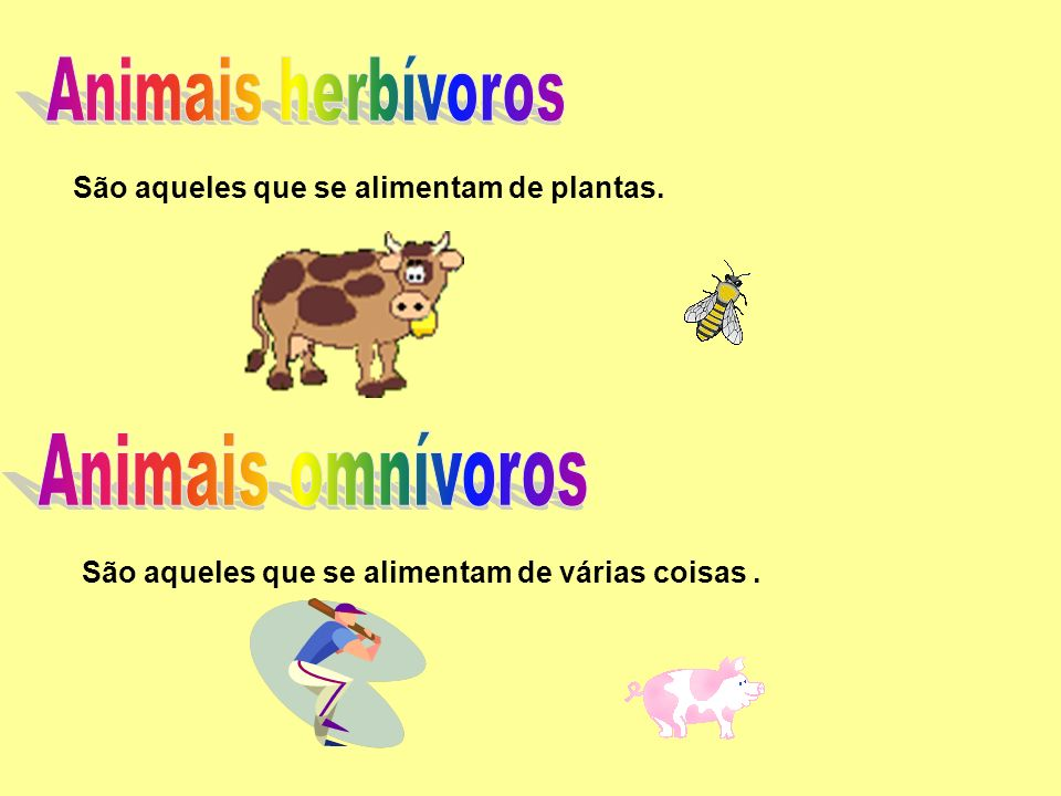Animais omnívoros Animais herbívoros
