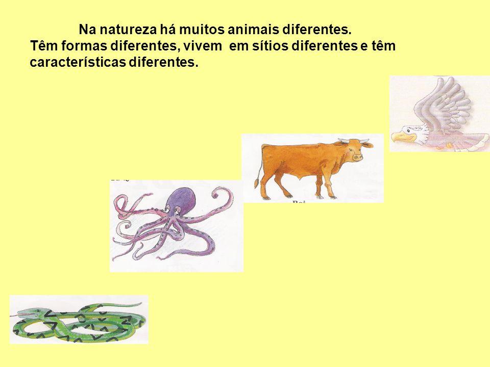 Na natureza há muitos animais diferentes