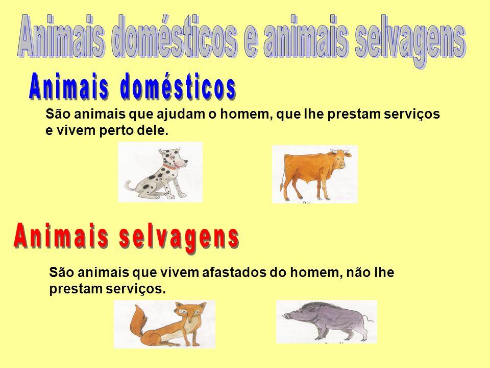 Animais domésticos e animais selvagens