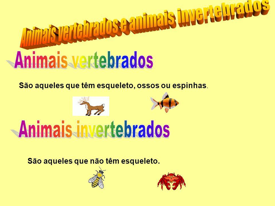 Animais vertebrados e animais invertebrados