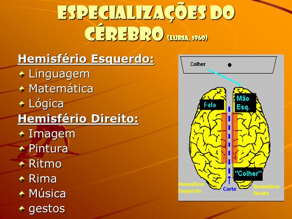 Especializações do cérebro (Luria, 1960)
