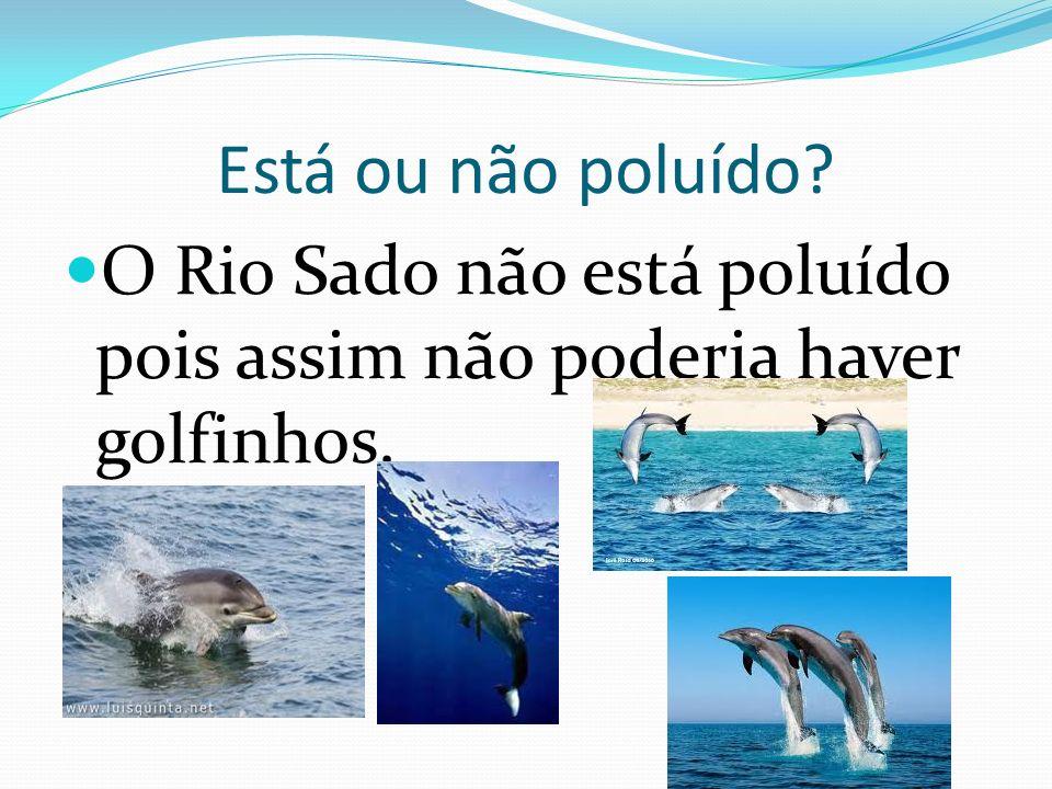 Está ou não poluído O Rio Sado não está poluído pois assim não poderia haver golfinhos.