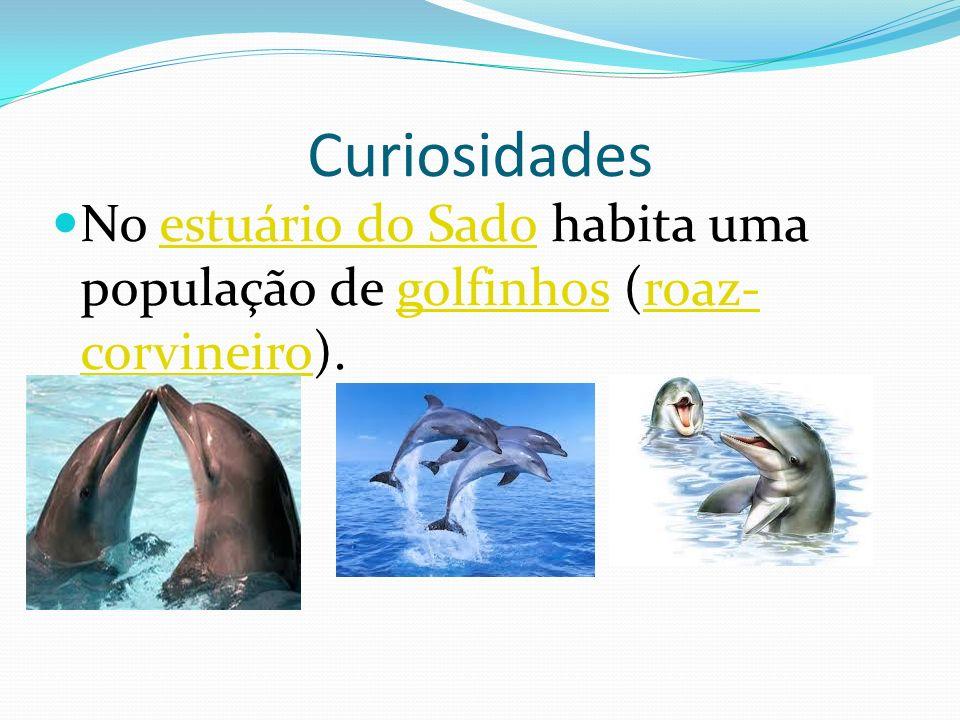 Curiosidades No estuário do Sado habita uma população de golfinhos (roaz-corvineiro).