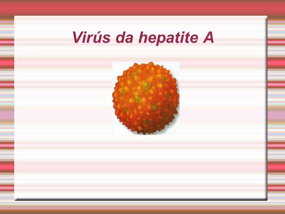 Virús da hepatite A
