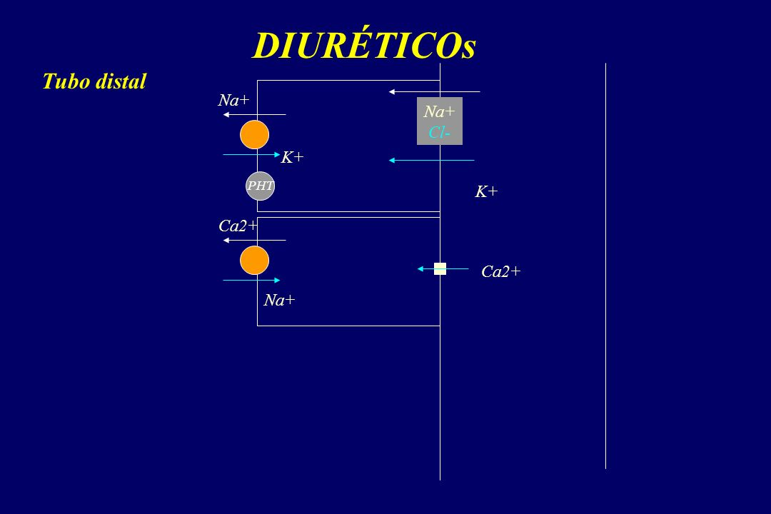 DIURÉTICOs Tubo distal Na+ Na+ Cl- K+ PHT K+ Ca2+ Ca2+ Na+